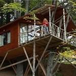 cabana din copac